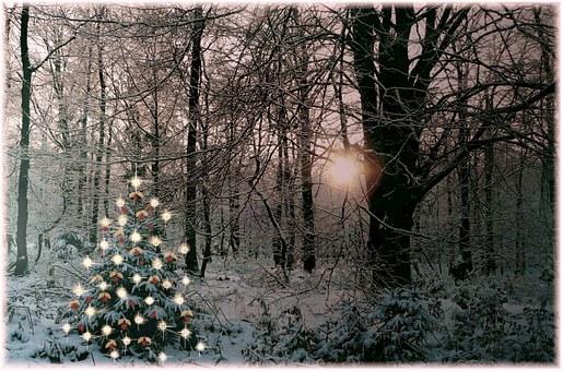 christmas-tree-354258__340